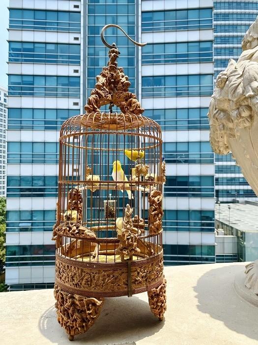 Chim 'Bach Vuong moi hong', dai gia tra 500 trieu khong ban-Hinh-8