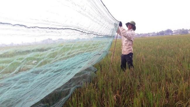 Chau chau gia 250.000 dong/kg duoc san lung rao riet-Hinh-2