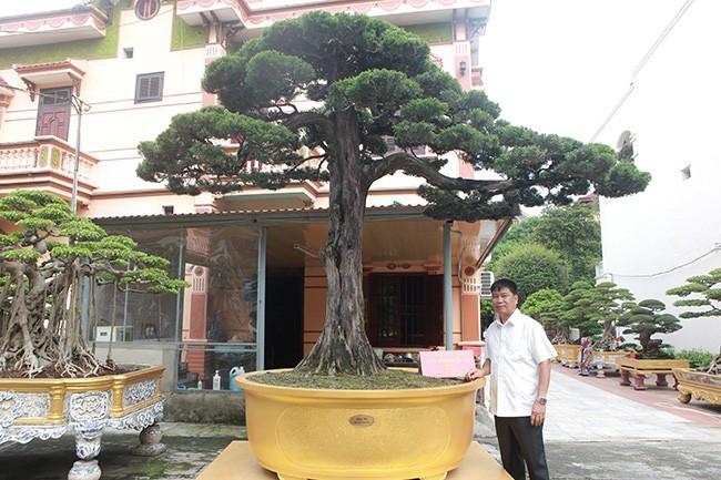 Cay duyen tung hon 300 tuoi duoc tra 1 trieu USD van khong ban-Hinh-2