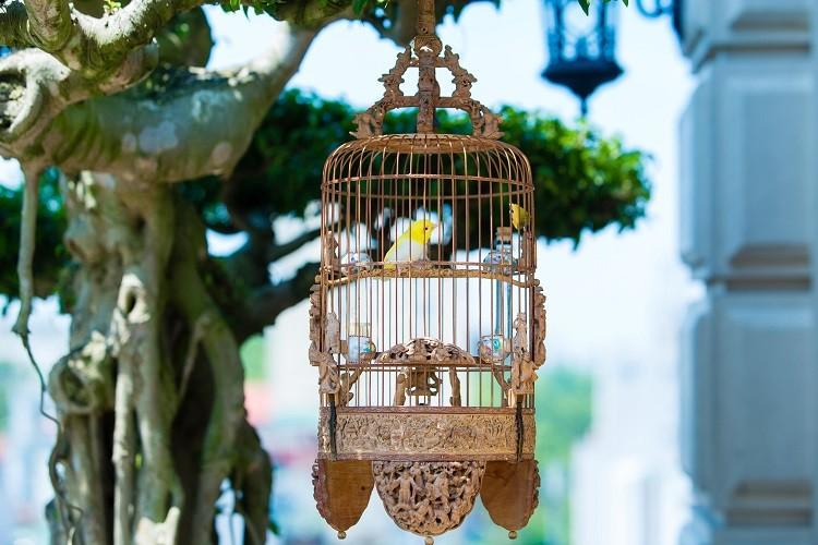 Dan chim 10 ty: O phong dieu hoa, co 2 bao mau cham soc rieng-Hinh-10