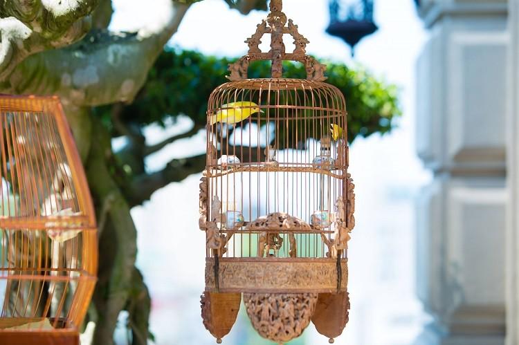 Dan chim 10 ty: O phong dieu hoa, co 2 bao mau cham soc rieng-Hinh-3