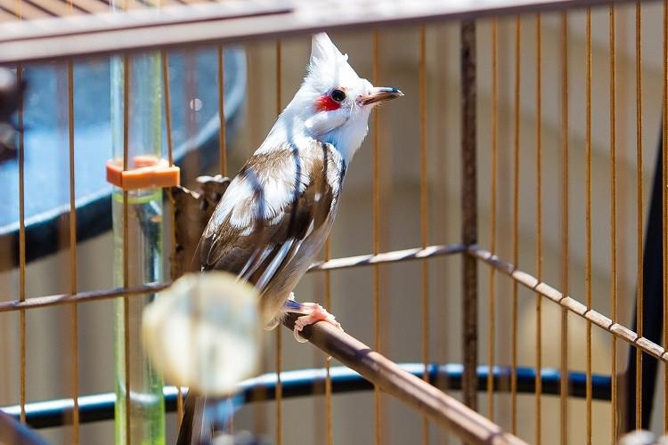 Dan chim 10 ty: O phong dieu hoa, co 2 bao mau cham soc rieng-Hinh-5