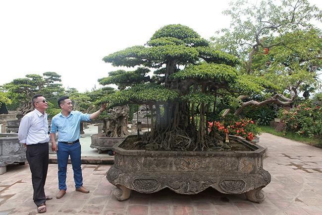 Anh ban hang rong chi 16 ty mua cay sanh Tien lao giang tran-Hinh-6