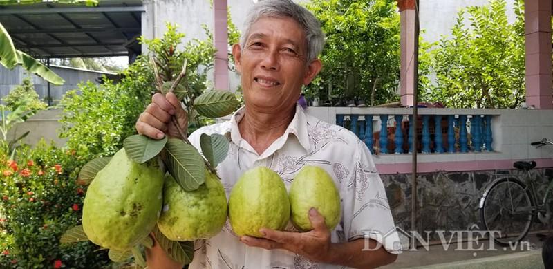 Loai oi la cho trai sieu to, moi trai nang hon 1kg la chuyen thuong-Hinh-3