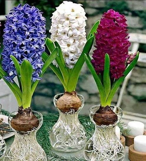 Nhung loai hoa pha phong thuy khong duoc de trong nha-Hinh-2