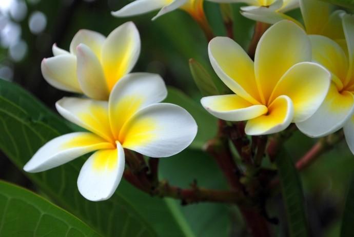 Nhung loai hoa pha phong thuy khong duoc de trong nha-Hinh-4