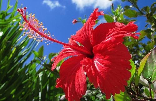 Nhung loai hoa pha phong thuy khong duoc de trong nha-Hinh-5