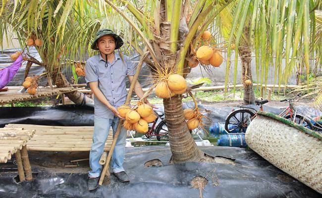 Giong qua 2 mau o Viet Nam cho nuoc ngot lu-Hinh-13