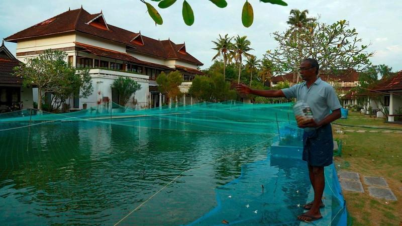 E am chua tung co, resort 5 sao lay ho boi lam ao nuoi ca-Hinh-2