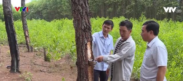Bao ngu dong lanh Trung Quoc ban cho dan Viet duoi mac do Han-Hinh-4