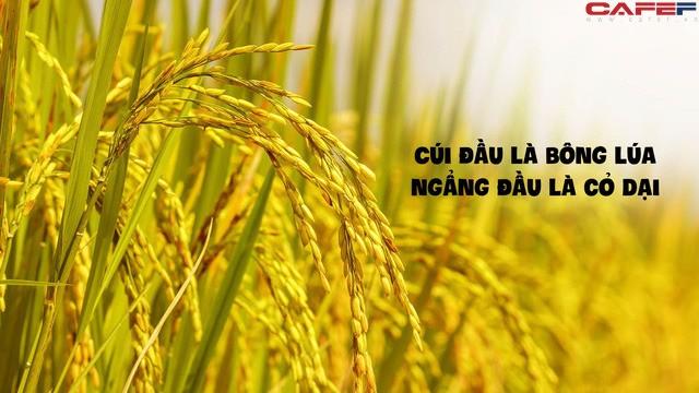 3 dac diem tuong mao cua mot nguoi co van may due hue-Hinh-2