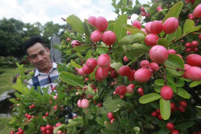 Man nhan dan so ri bonsai nang triu qua-Hinh-2