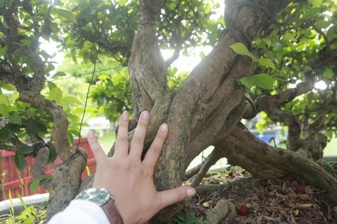 Man nhan dan so ri bonsai nang triu qua-Hinh-4