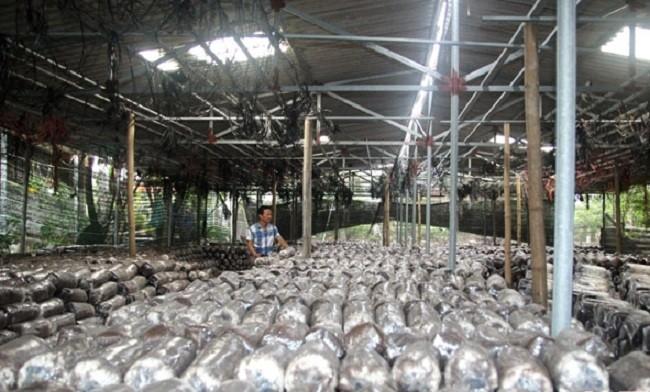 Lao nong thu nhap hon 300 trieu/nam nho trong loai cay nay-Hinh-5