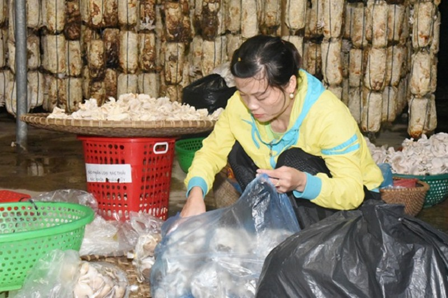 Lao nong thu nhap hon 300 trieu/nam nho trong loai cay nay-Hinh-6