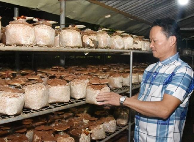 Lao nong thu nhap hon 300 trieu/nam nho trong loai cay nay