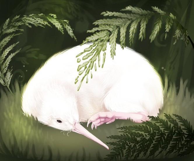 Con kiwi trang chet tren ban mo khien ca New Zealand tiec-Hinh-3