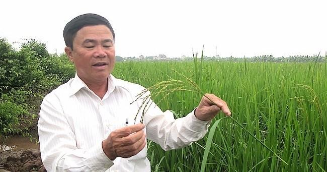 Bi mat ve loai gao dat gap 10 lan gao thuong-Hinh-2