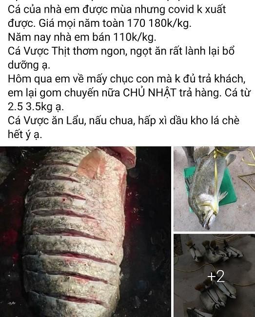 Ca vuoc rot gia chi con 65.000 dong/kg-Hinh-3