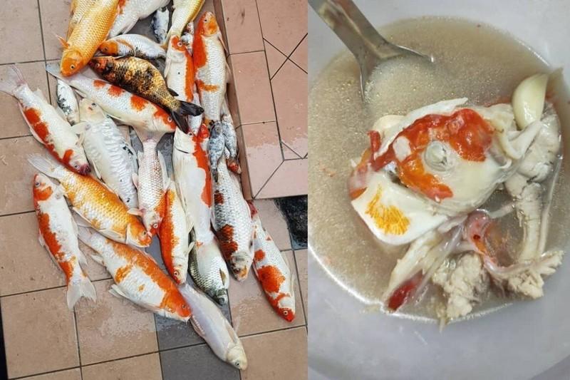Co gai Malaysia bi chi trich vi nau sup dan ca Koi da chet