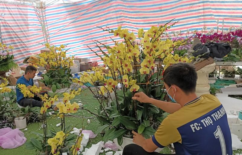 Hoa lan Trung Quoc dat do ngang ngua lan Da Lat-Hinh-10