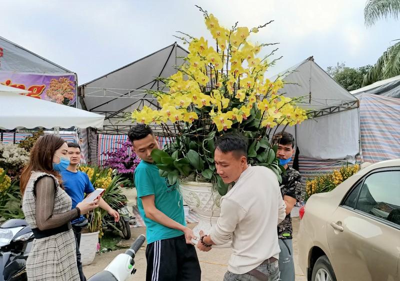 Hoa lan Trung Quoc dat do ngang ngua lan Da Lat-Hinh-11