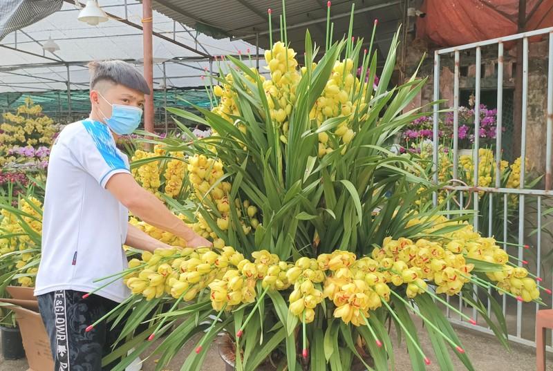 Hoa lan Trung Quoc dat do ngang ngua lan Da Lat-Hinh-5