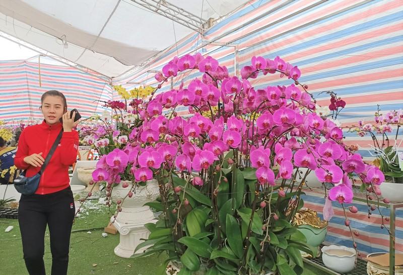Hoa lan Trung Quoc dat do ngang ngua lan Da Lat-Hinh-8