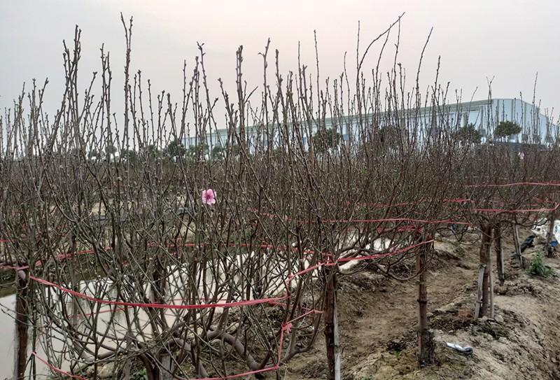 Lang dao Hai Duong nguy khon, rao ban gap 1.000 goc-Hinh-3
