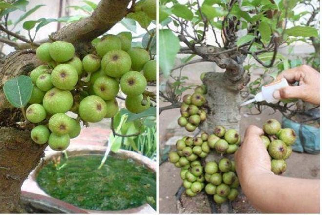 Tao bonsai no hoa dam but, hai duong chi chit nu keo 502-Hinh-3