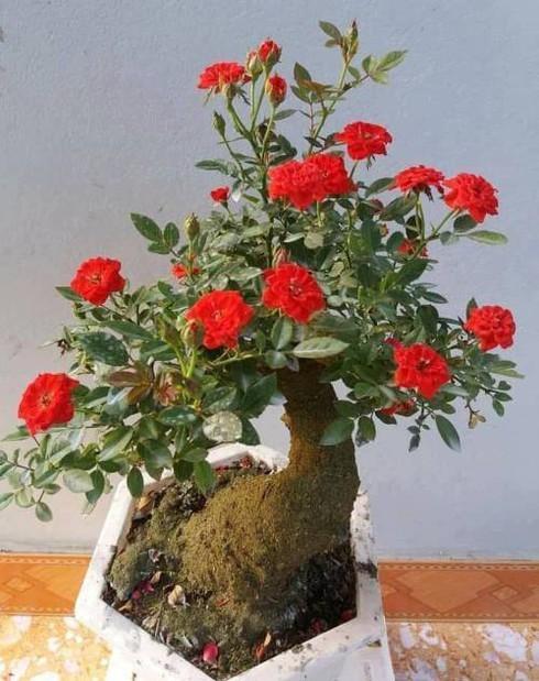 Tao bonsai no hoa dam but, hai duong chi chit nu keo 502-Hinh-5
