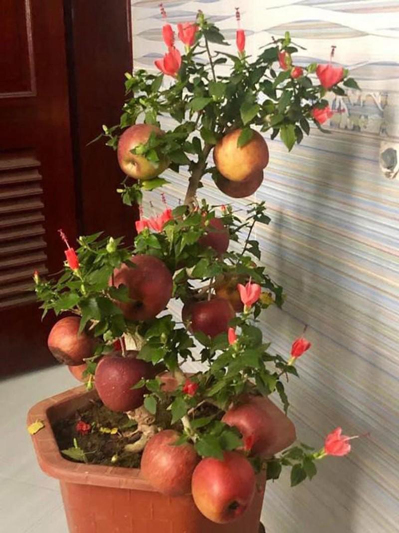 Tao bonsai no hoa dam but, hai duong chi chit nu keo 502