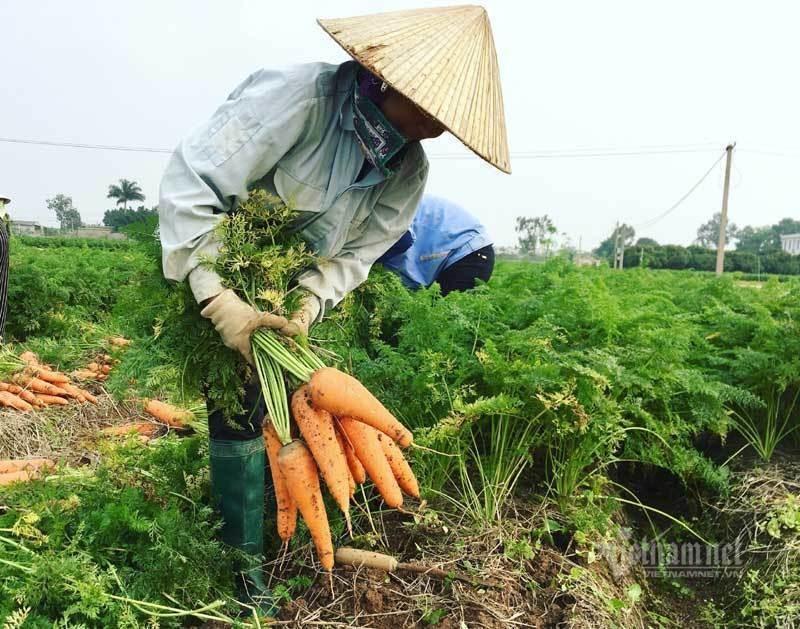 Giai cuu gap 100 ngan tan san vat Hai Duong-Hinh-2