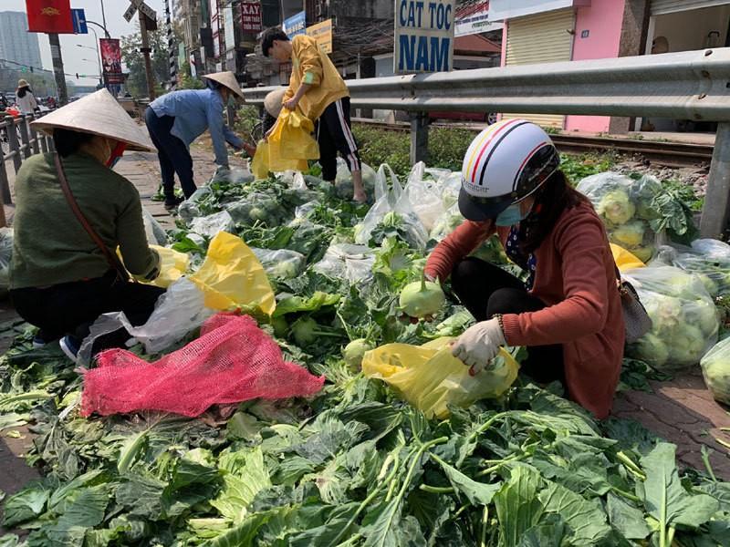 Dan Ha Noi chung tay giai cuu rau xanh cho nong dan Hai Duong-Hinh-13