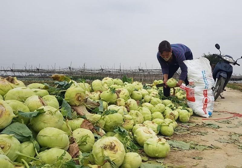 Dan Ha Noi chung tay giai cuu rau xanh cho nong dan Hai Duong-Hinh-3