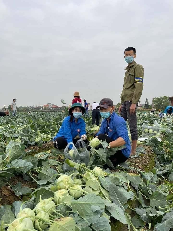 Dan Ha Noi chung tay giai cuu rau xanh cho nong dan Hai Duong-Hinh-4