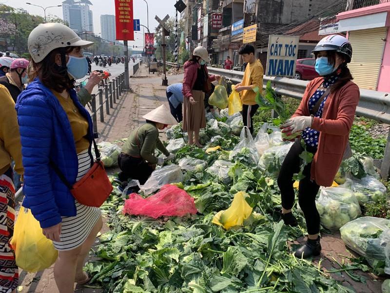 Dan Ha Noi chung tay giai cuu rau xanh cho nong dan Hai Duong-Hinh-7