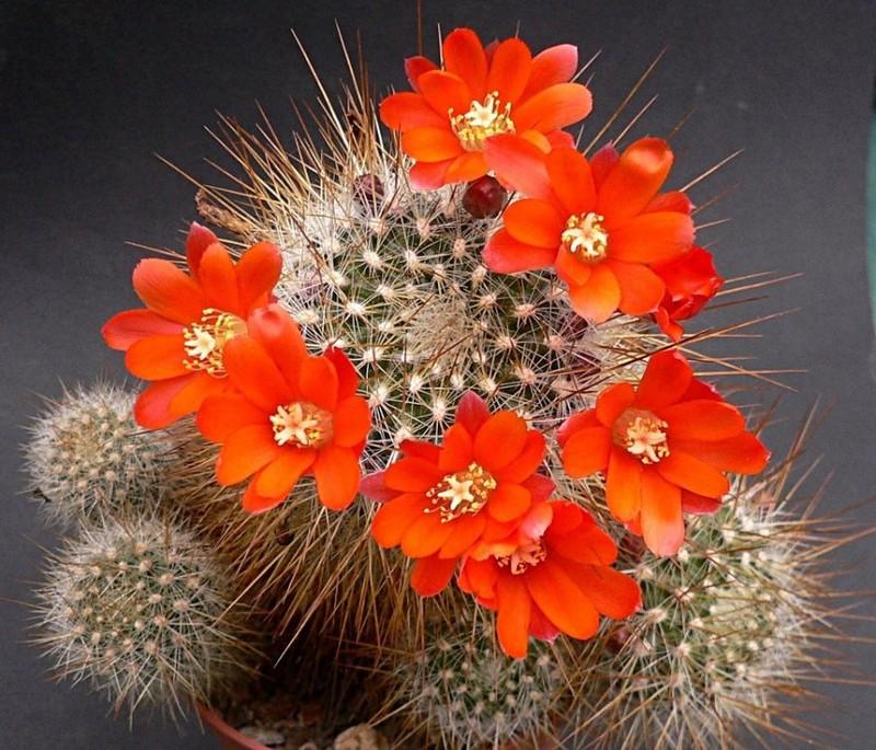 6 loai cay co tinh am, vo tinh dat trong nha se ruoc dai hoa