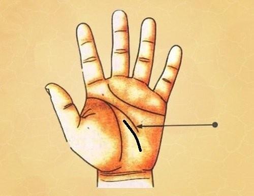 Ngua long ban tay, thay co dac diem nay sung suong den gia-Hinh-7