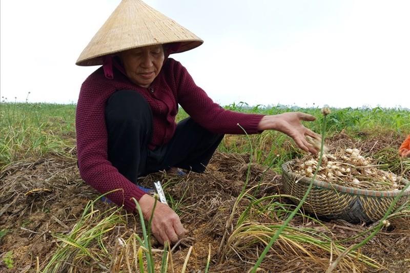 Dac san xu Nghe re chua tung co, do bo ve Ha Noi-Hinh-2