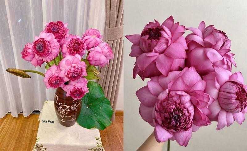 Hoa sen ngan canh chao he, chi em Ha thanh rao riet lung mua-Hinh-5