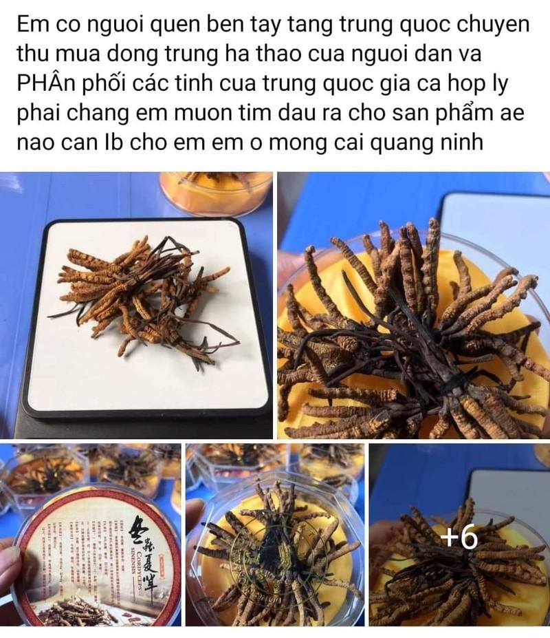 Thi truong dong trung ha thao no ro: Loan gia, loan chat luong-Hinh-2