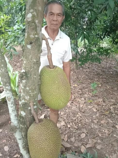 Mit Thai rot gia van khong co nguoi mua, nong dan mang mit cho ga an