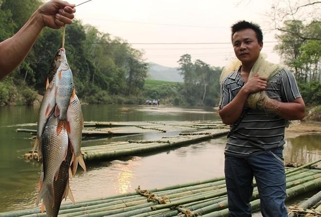 Doc dao banh chung nhan ca suoi o Thanh Hoa-Hinh-3