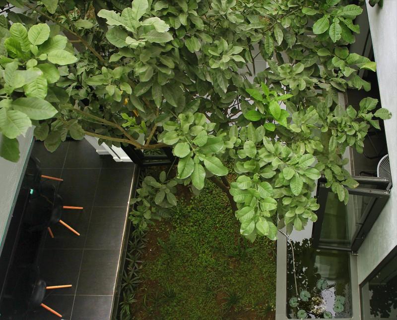Ngan ngo truoc khu vuon bi mat trong ngoi nha mau trang o Hai Phong-Hinh-9