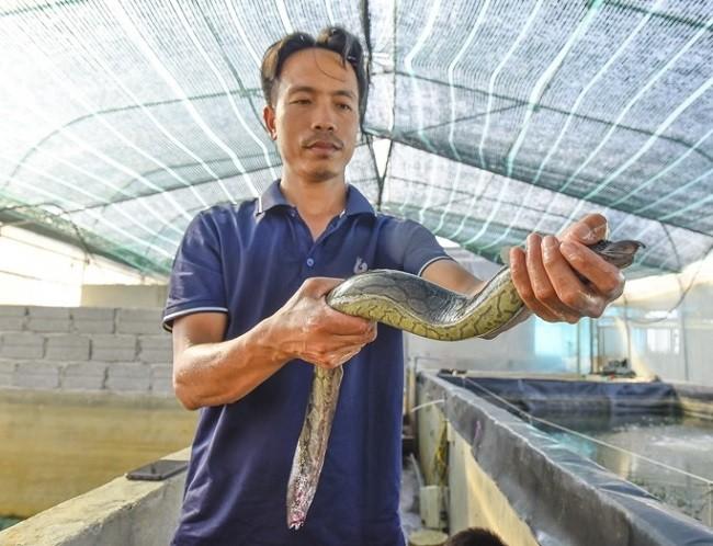 Nuoi nhan sam duoi nuoc, 8x Thanh Hoa thu ve hon 600 trieu dong/nam-Hinh-3
