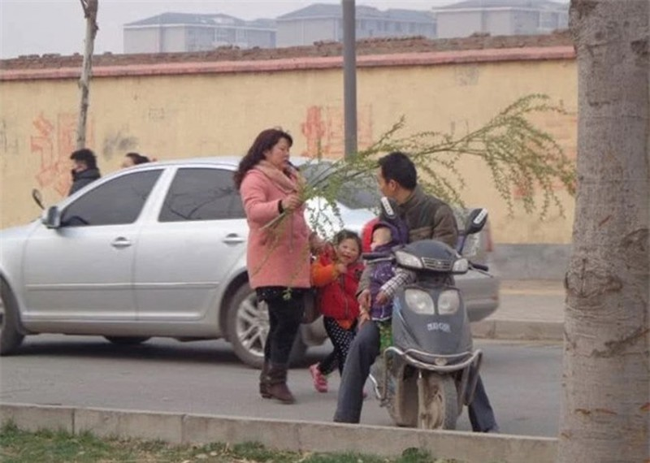 Loai cay khong ai nghi co the an duoc, nguoi Trung Quoc hai trui cong vien-Hinh-4
