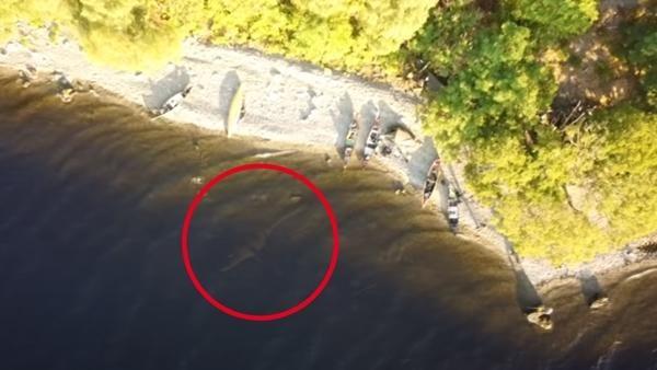 """Văn hoá - Xuất hiện video ghi lại hình ảnh """"quái vật hồ Loch Ness"""" gây tranh cãi"""