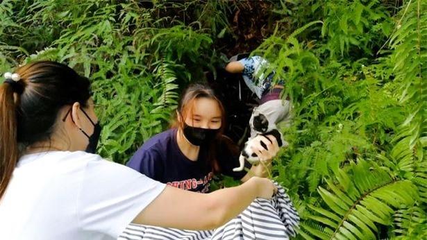 Cho con bi khi hoang bat coc va man giai cuu con vat dang thuong-Hinh-4