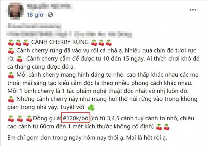 Ro con sot cam cherry rung, hang ve den dau het den do-Hinh-3